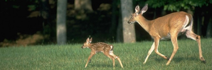 Take care of the deer with feed & seed from Cherokee Feed & Seed