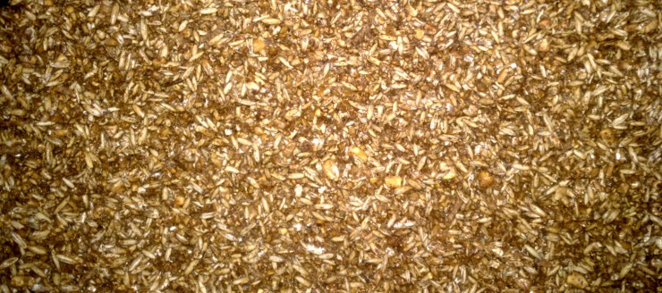 Cherokee Feed & Seed carries all the top brands of horse feed.