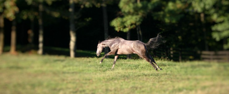 Cherokee Feed & Seed carries the leading brands of horse feed to meet all budgets.