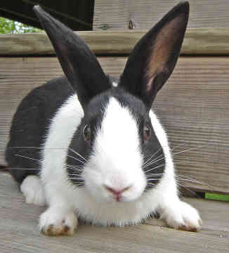 Find food for your rabbit at Cherokee Feed & Seed
