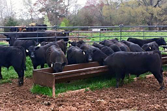 Cattle Feed & Supplies - Cherokee Feed & Seed - Ball Ground & Gainesville, GA