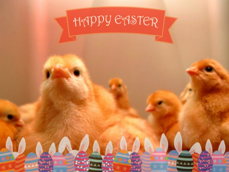 Happy Easter! The chicks arrive March 29th!
