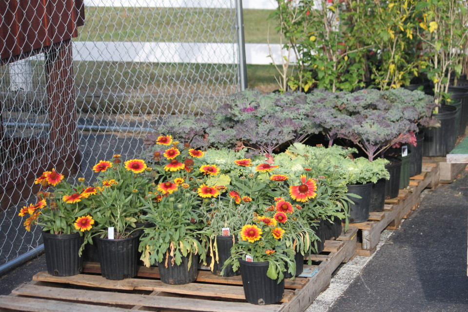 Flowers and Vegetables at Cherokee Feed & Seed