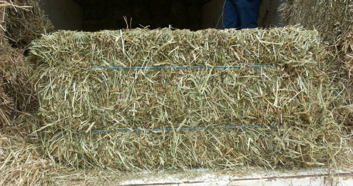 Canadian Timothy square hay bale at Cherokee Feed & Seed Ball Ground and Gainesville, GA