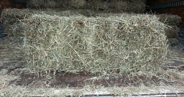 Kentucky Timothy square hay bale at Cherokee Feed & Seed Ball Ground and Gainesville, GA