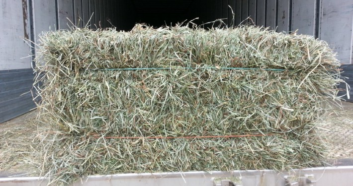 Orchard Alfalfa square hay bale at Cherokee Feed & Seed Ball Ground and Gainesville, GA