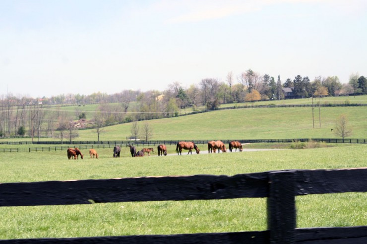Pasture Seeding, Fertilizing & Liming Services from Cherokee Feed & Seed