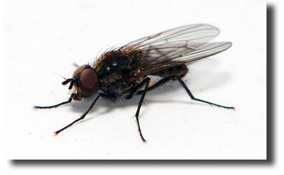 Prevent horse flies from hatching
