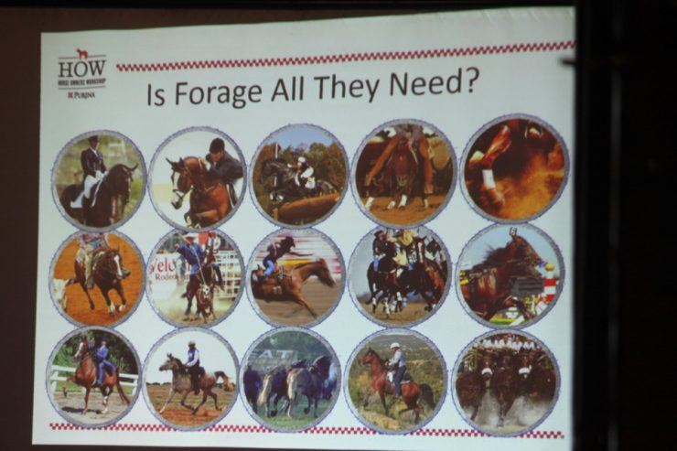 Do horses need more than just forage?