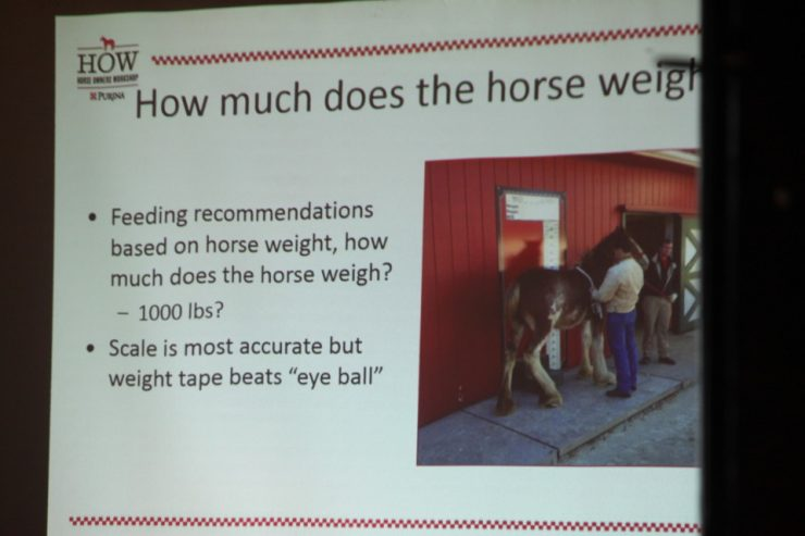 How much does your horse weigh?