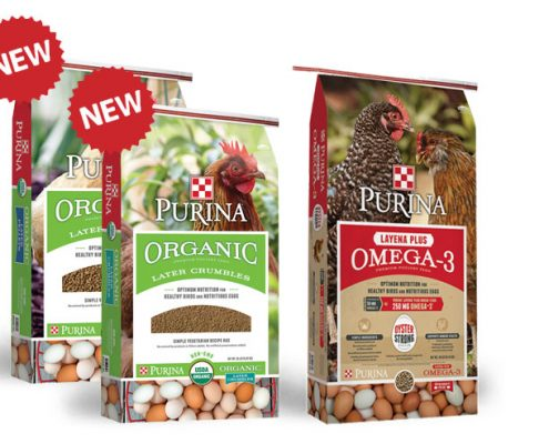 Find organic chicken feed from Purina Mills at Cherokee Feed & Seed stores.