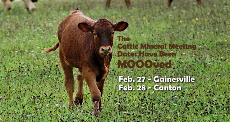 Cattle Mineral Meetings - February 2017