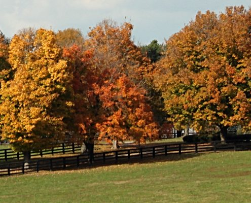 See pastures in the fall