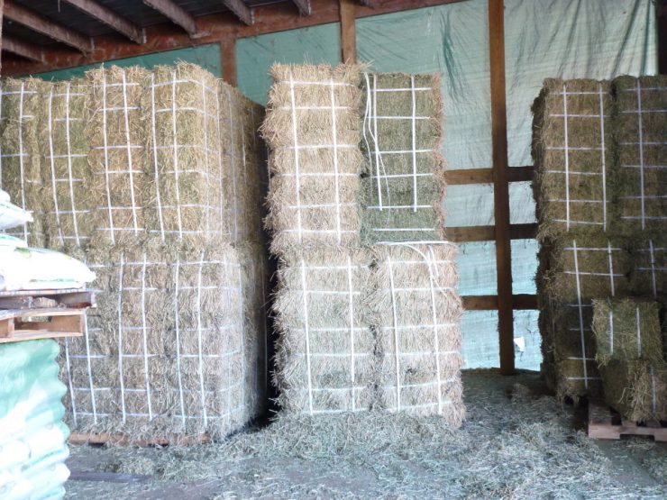 Cherokee Feed & Seed carries hay for all your livestock