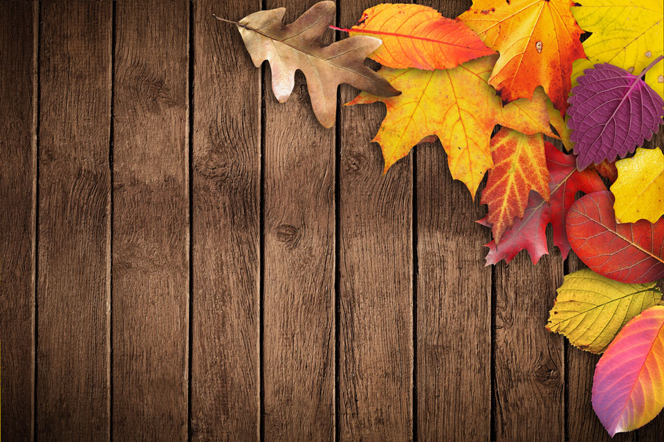 Autumn Banner Poster Text Box Invitation Map Wood Sm