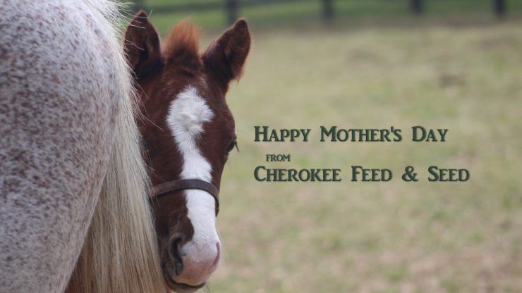 Happy Mother's Day from Cherokee Feed & Seed - Georgia