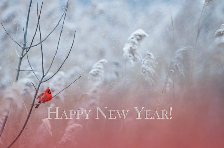 Happy New Year from Cherokee Feed & Seed in Georgia!