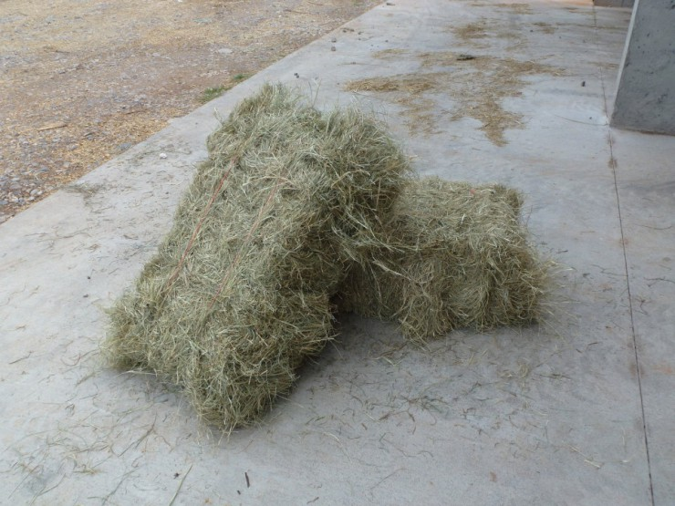 Coastal square hay bale at Cherokee Feed & Seed Ball Ground and Gainesville, GA