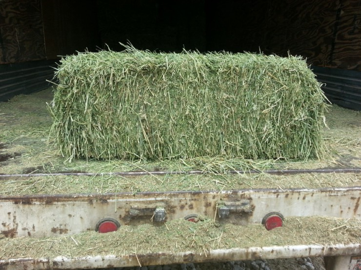Western Alfalfa square hay bale at Cherokee Feed & Seed Ball Ground and Gainesville, GA