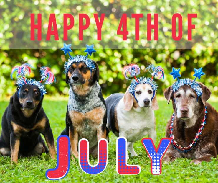 Top Ten Tips to Protect Your Animals on July 4th