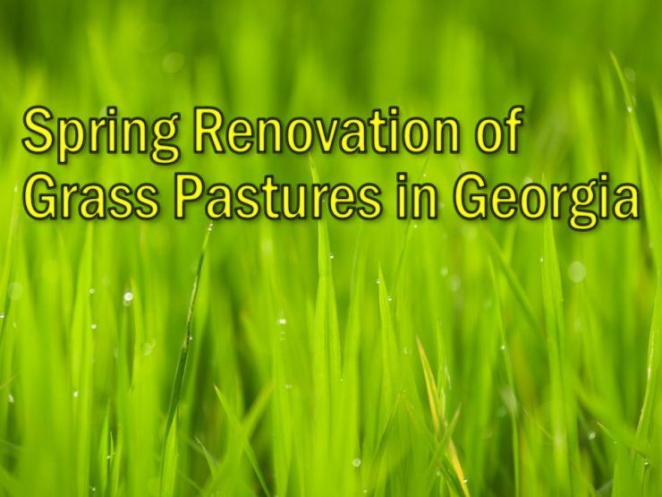 Spring Renovation of Grass Pastures in Georgia