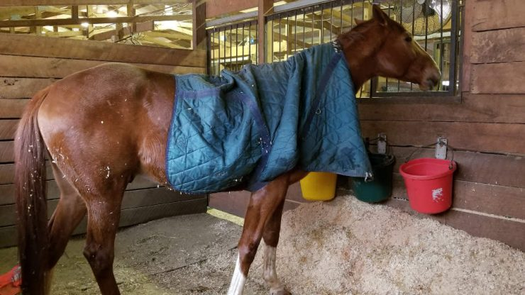 Not every horse wants to be blanketed