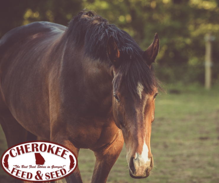 Dental Health for Senior Horses