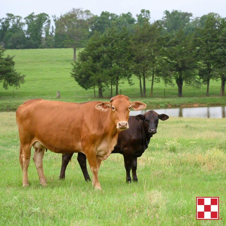 Purina Productive Cows