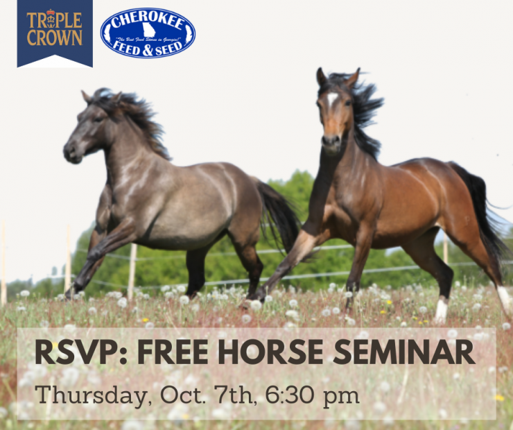 Horses in the field running, promotion for Free Horse Seminar